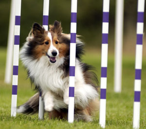 http://www.offthebeatenpath-photos.com/images/Dog_Agility.jpg